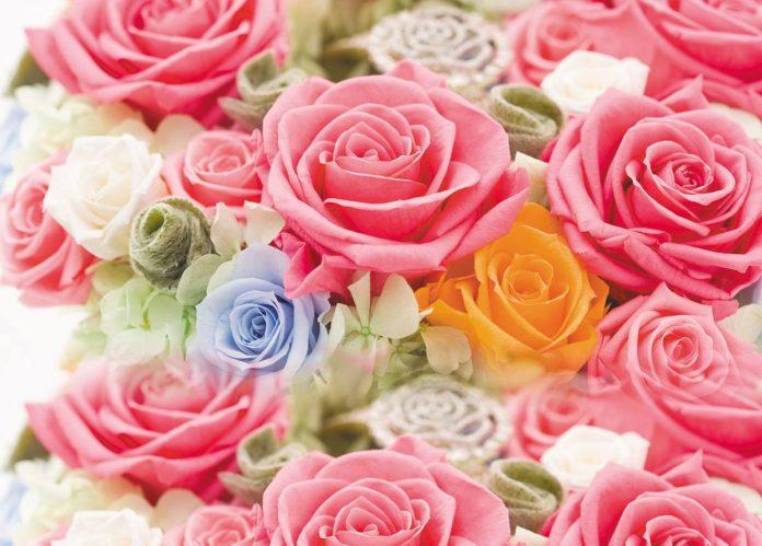 -preserved-roses