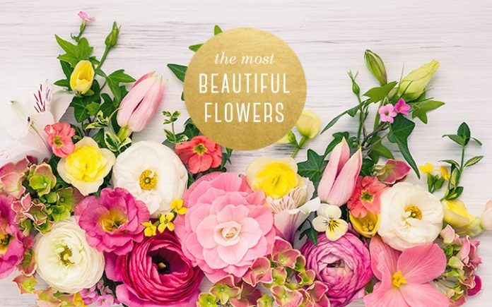 Amazing flowers for beautiful people in the world
